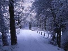 Bospad met sneeuw