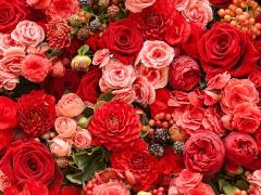 Bloementapijt van rode bloemen
