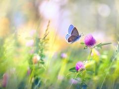 Blauwe vlinder die naar een bloem vliegt. Meer zomerse bloemen op de achtergrond