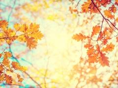 Zonnige foto met takken met herfstgekleurde blaadjes, blauwe lucht en zon